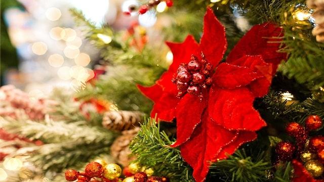 Natale cristiano: stai davvero adorando il Signore Gesù?