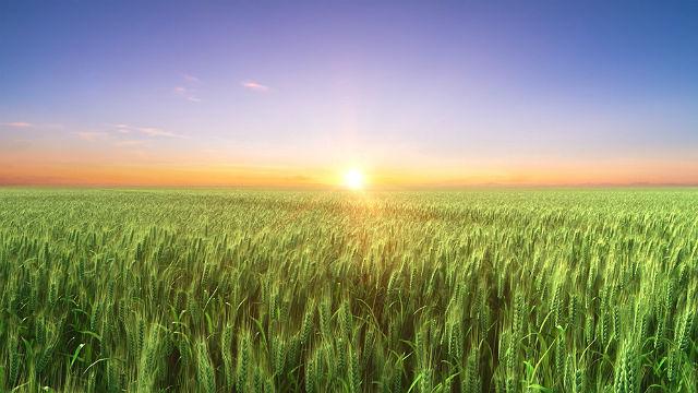 versetti della Bibbia sulle promesse di Dio: trova la strada verso il regno dei cieli